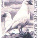Sheathbill postage stamp