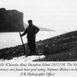 sheathbill hunt historic